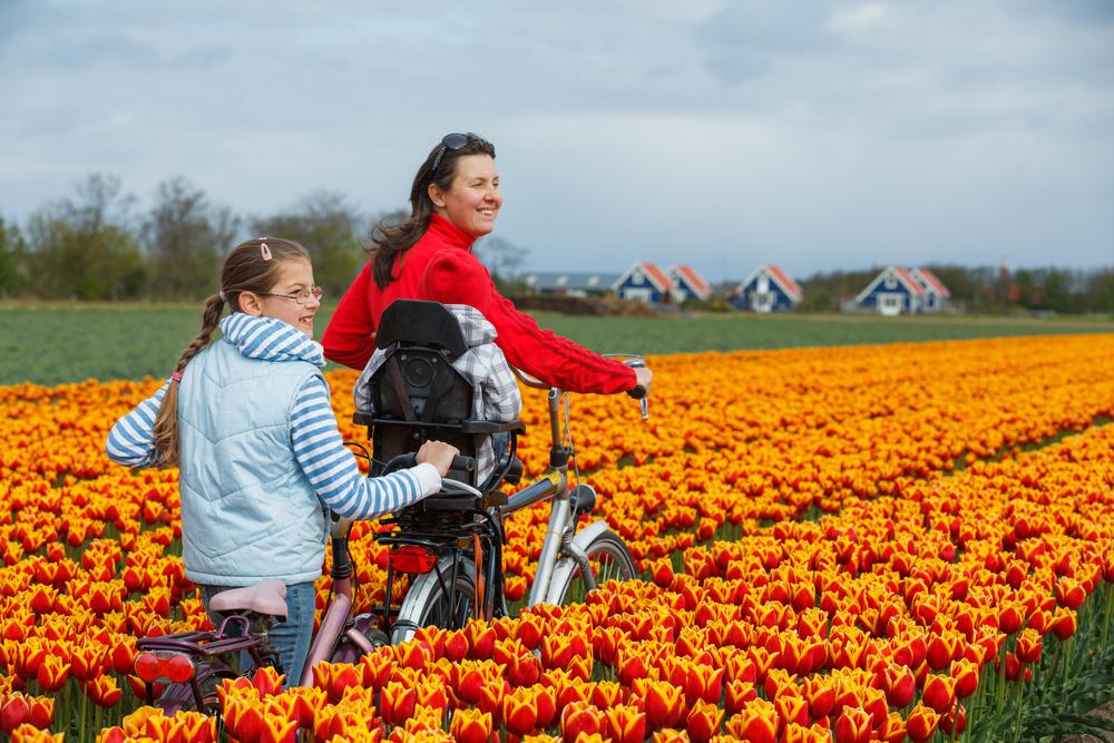 Нидерландским велосипедистам запретят пользоваться мобилками