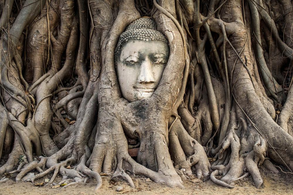 Голова Будды в корнях дерева – главный символ Аюттхаи