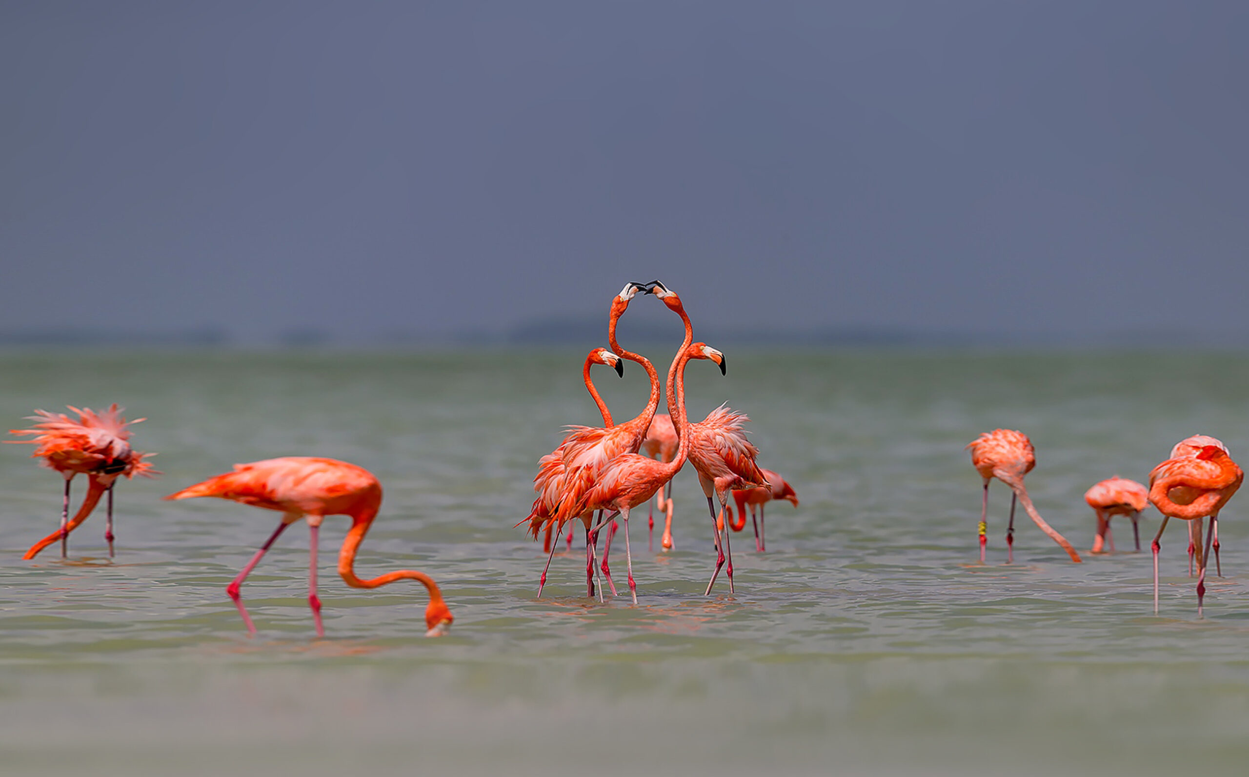 Фламинго – заботливые родители, но неверные супруги