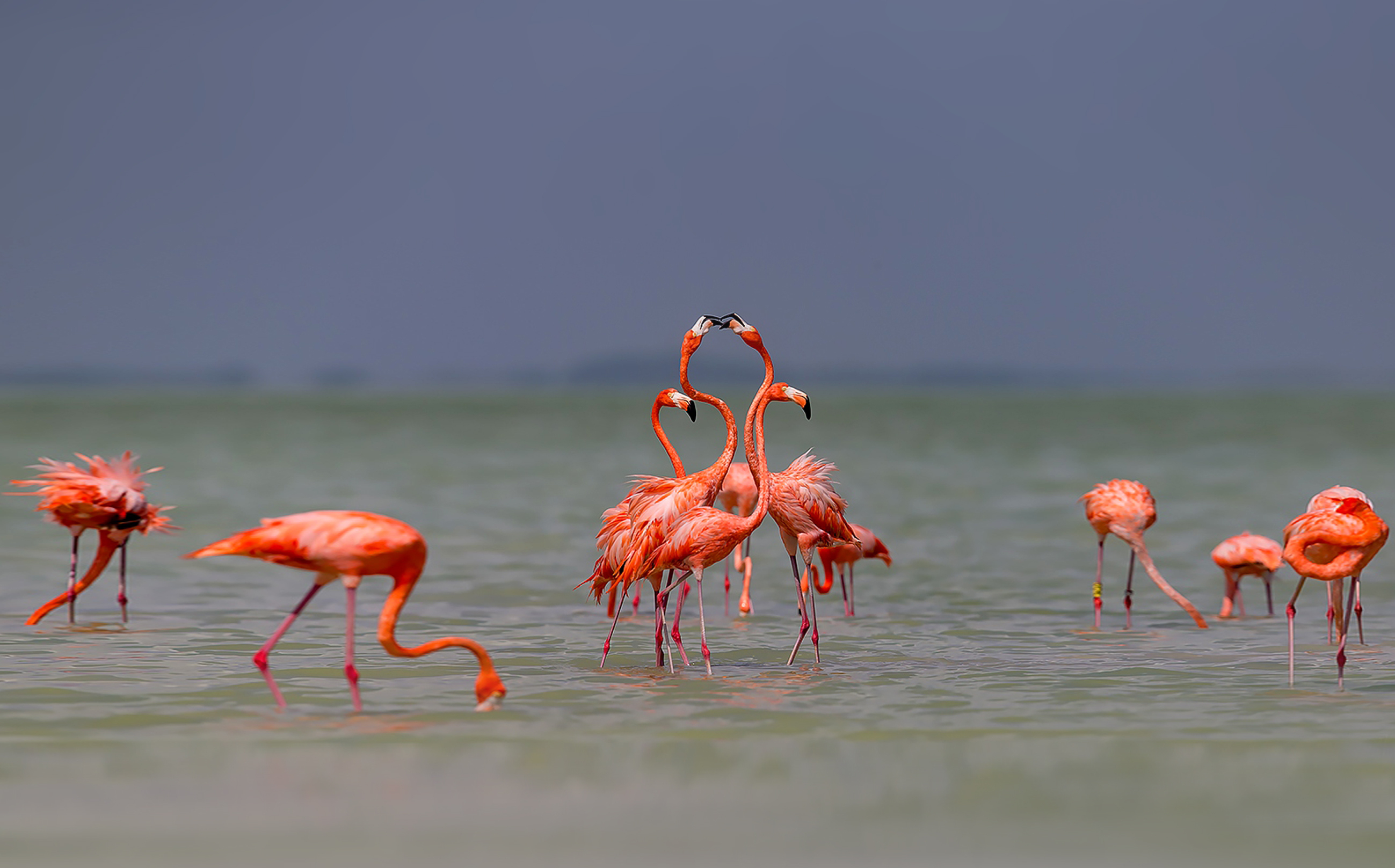 Фламинго – заботливые родители, но неверные супруги.Вокруг Света. Украина