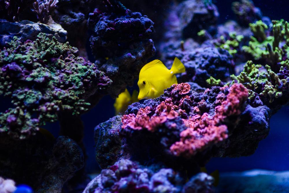 Во сколько оценили Большой Барьерный риф