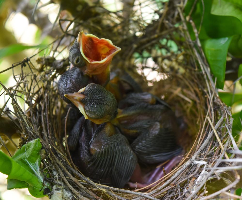 Городские птицы собирают окурки, чтобы бороться с паразитами