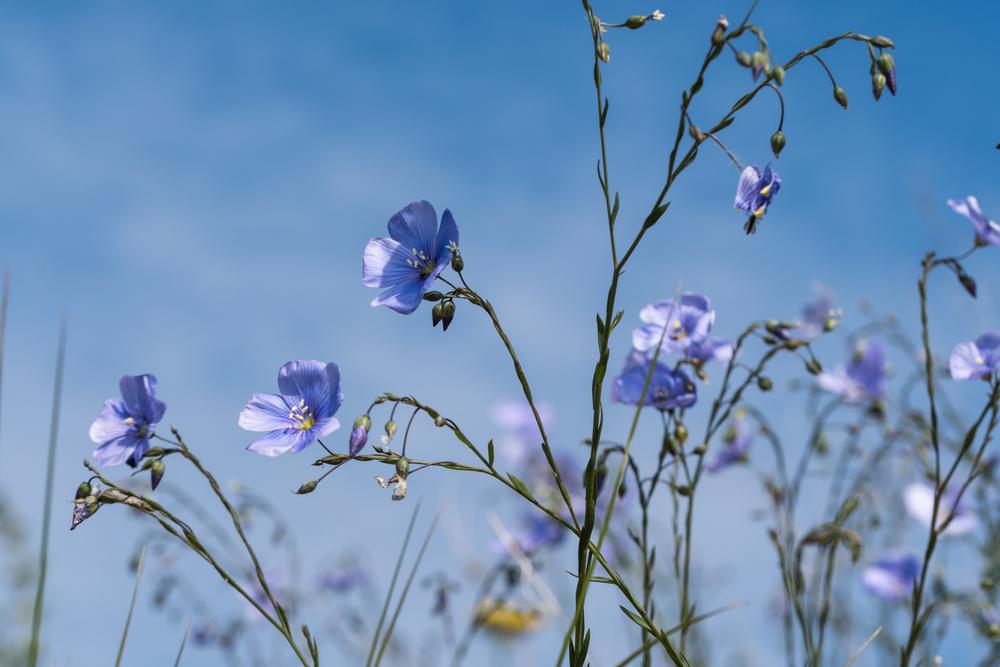 Лучшие идеи цветочных эко-туров в Украине и мире