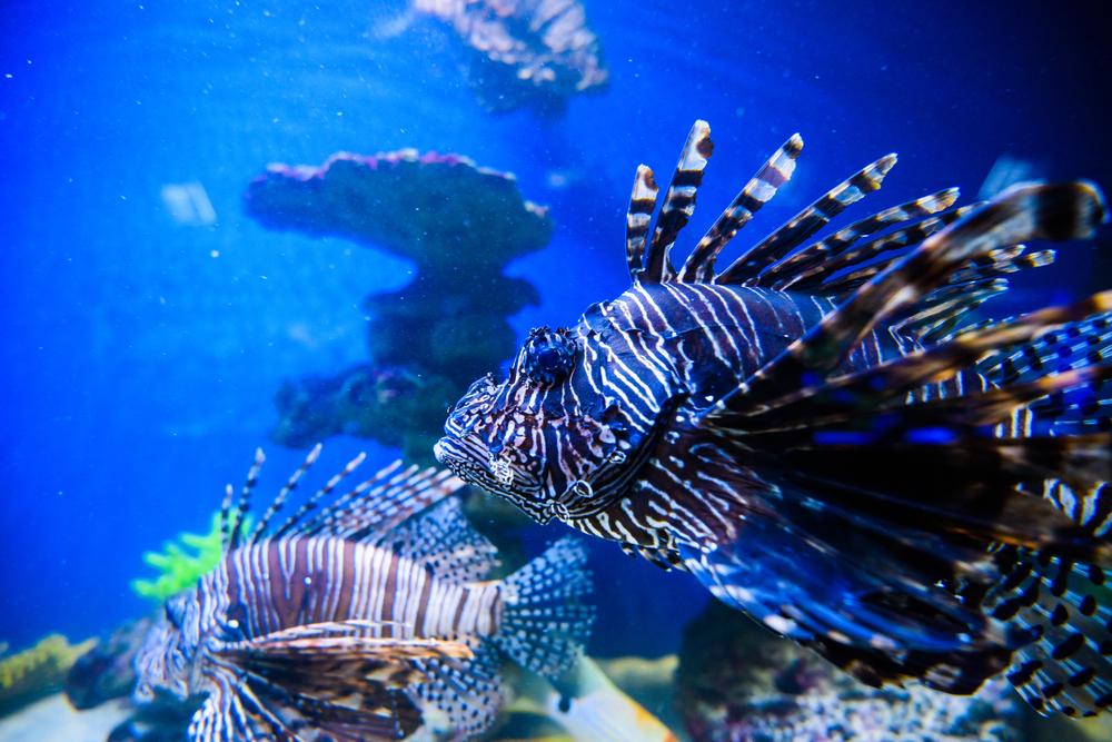 Размножение под водой: как продолжают род жители водоемов.Вокруг Света. Украина