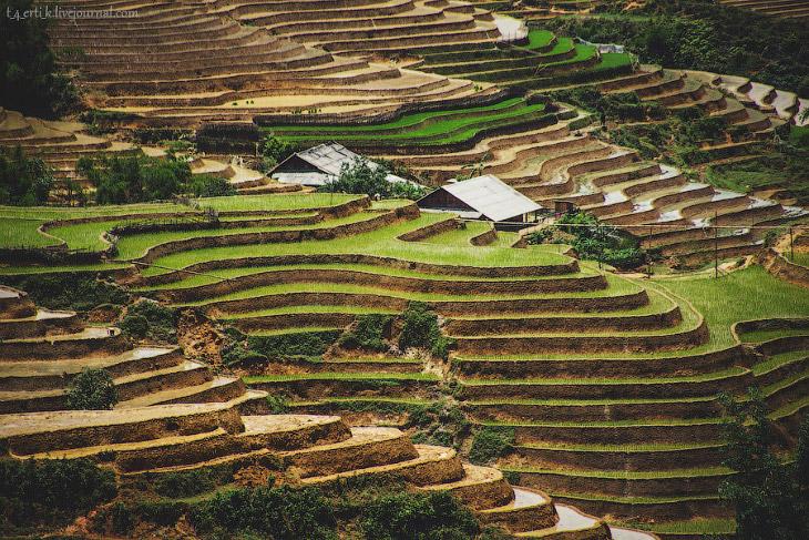 Прогулка по рисовым полям во