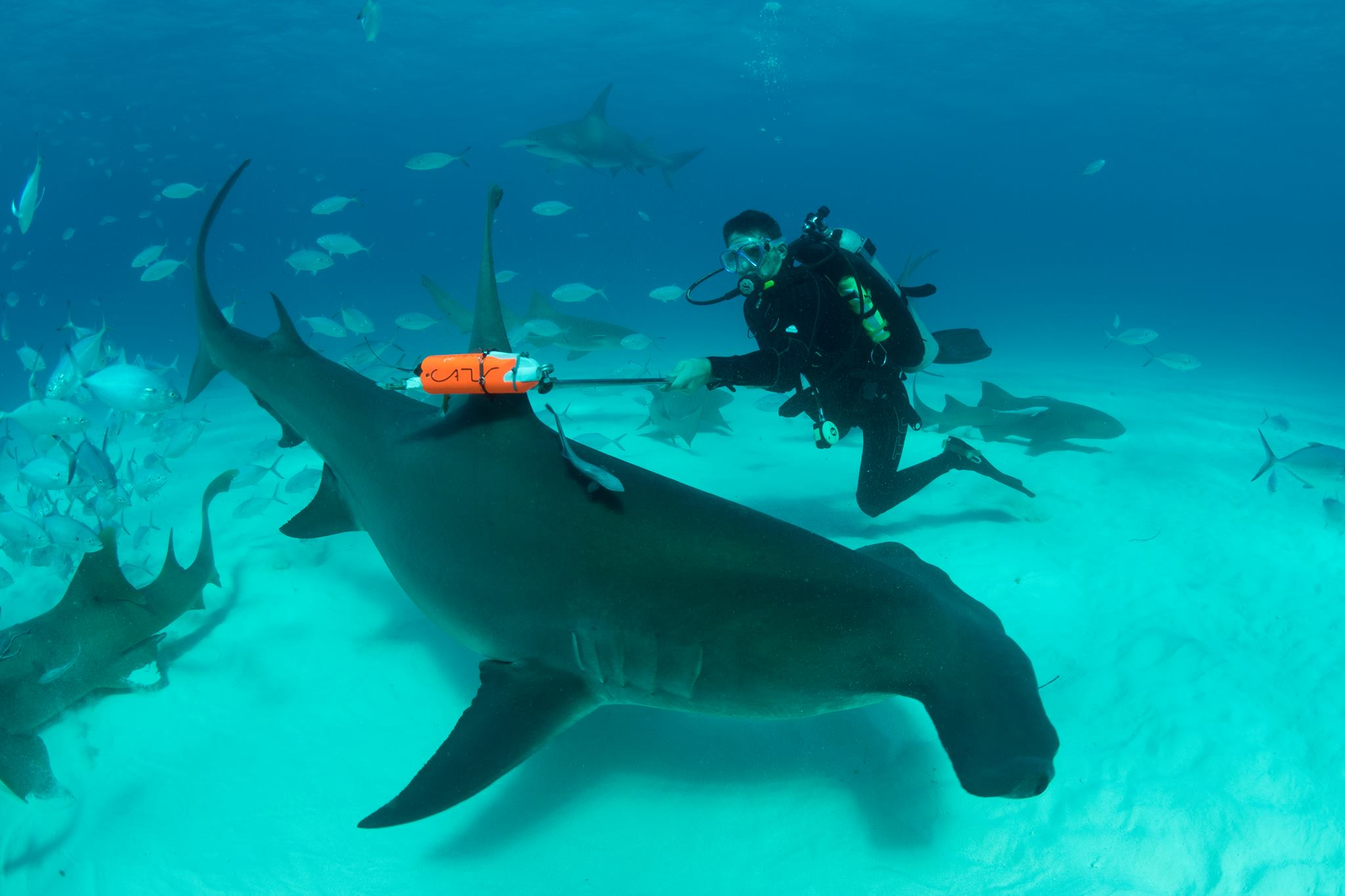 Гениальный хищник: 5 доказательств того, что акулы умны.Вокруг Света. Украина