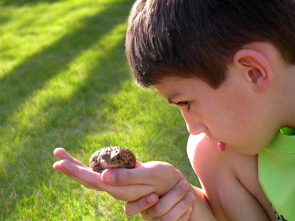 Ученые выяснили, что человек понимает язык лягушек и панд