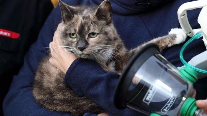 Шотландские пожарные нашли способ спасать котов от огня