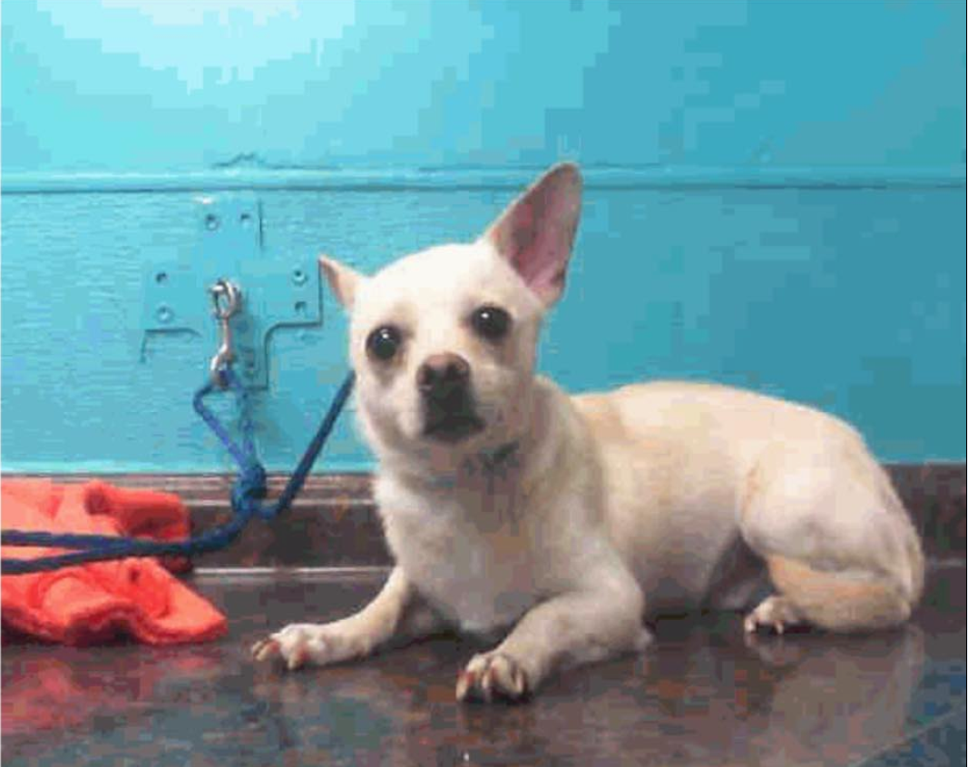 История брошенного в аэропорту щенка растрогала всю Америку