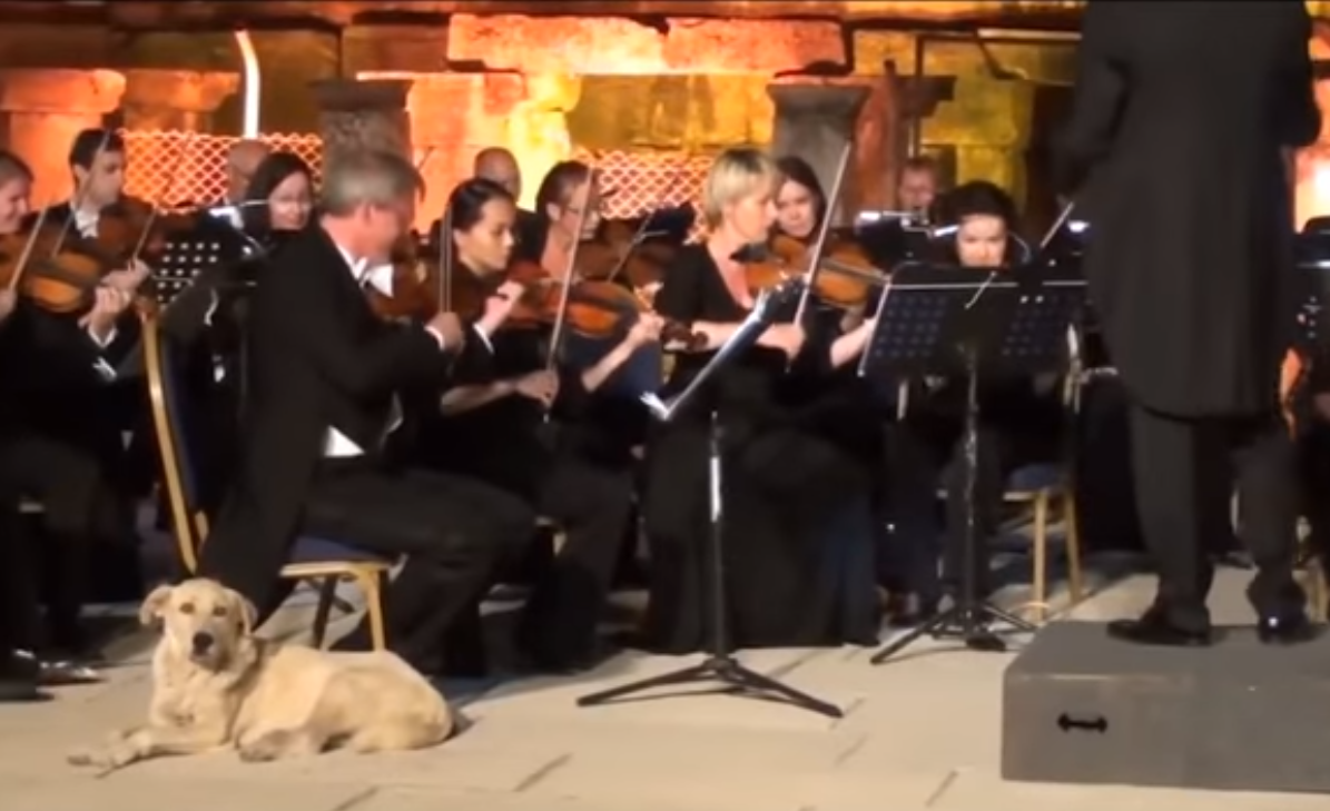 Пес вышел на сцену к Венскому оркестру и вызвал бурю аплодисментов