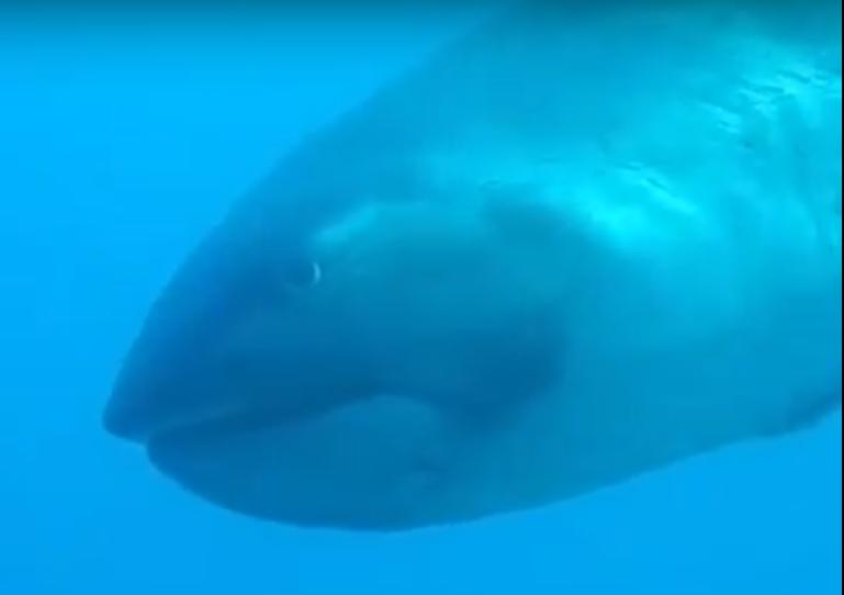 Туристке чудом удалось запечатлеть редчайшую акулу