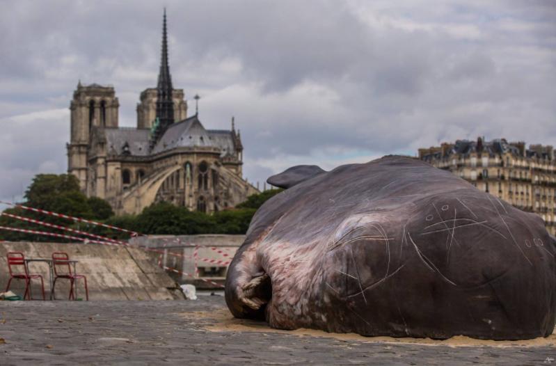 Парижане обнаружили мертвого кашалота на берегу Сены