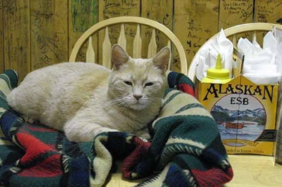 Аляска оплакала кота по кличке Стаббс: он мог стать президентом!