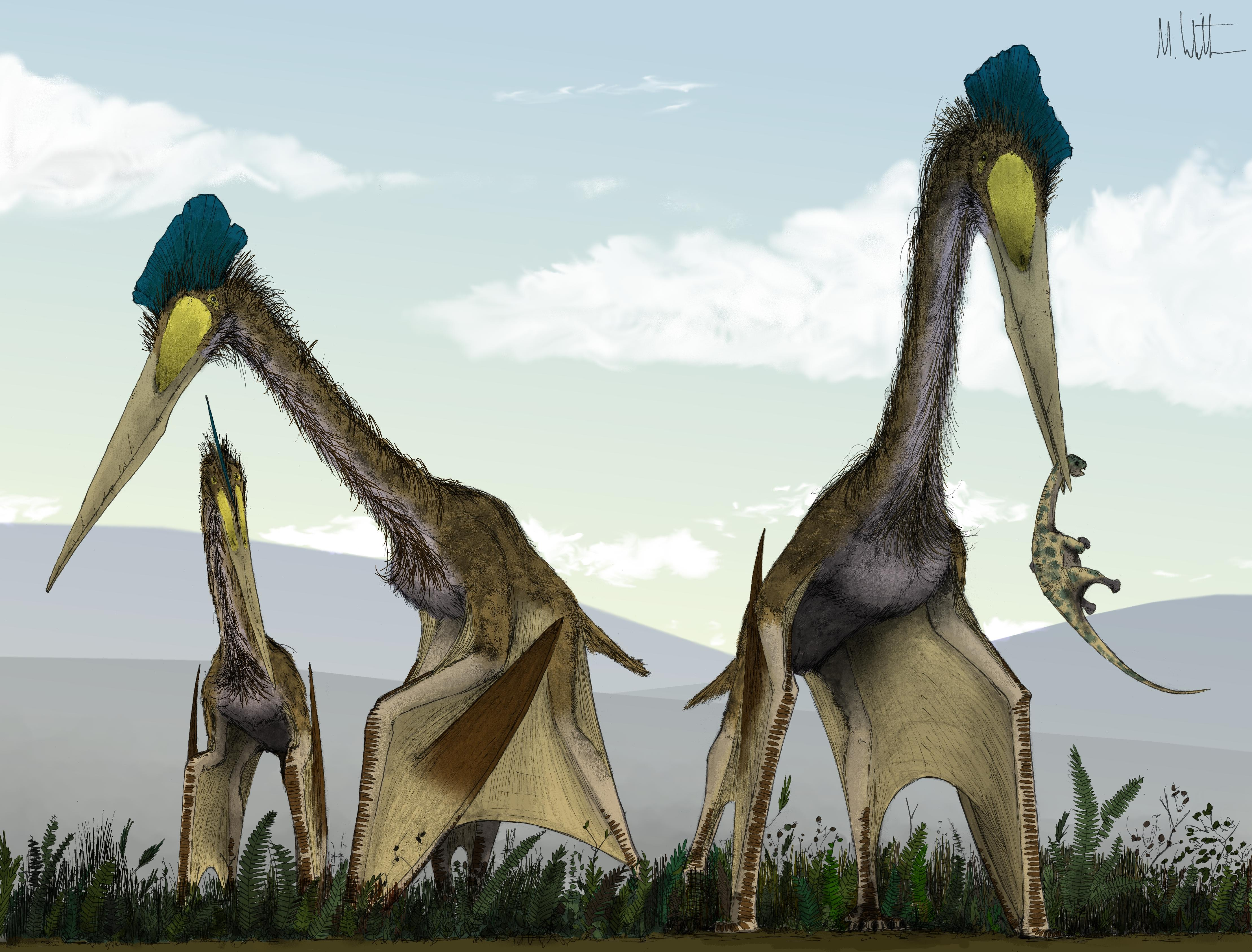 Не только птеродактили: палеонтологи выяснили, кому из птерозавров принадлежала загадочная кость.Вокруг Света. Украина