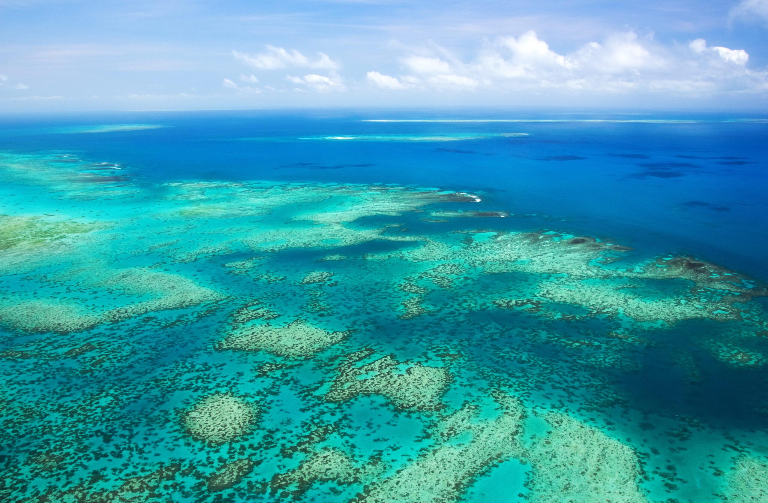 Большой барьерный риф исключили из списка объектов, которым грозит уничтожение.Вокруг Света. Украина