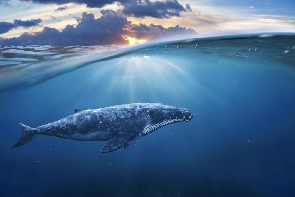 3 месяца не спать и 8 месяцев не есть: что еще могут киты