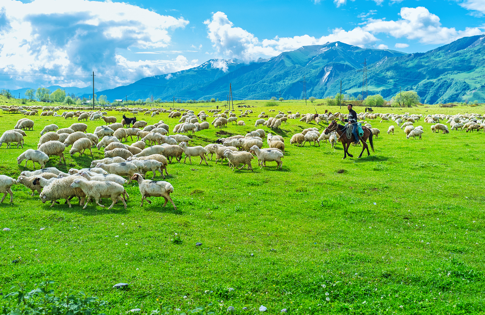 Как туристы облегчают жизнь грузинским пастухам