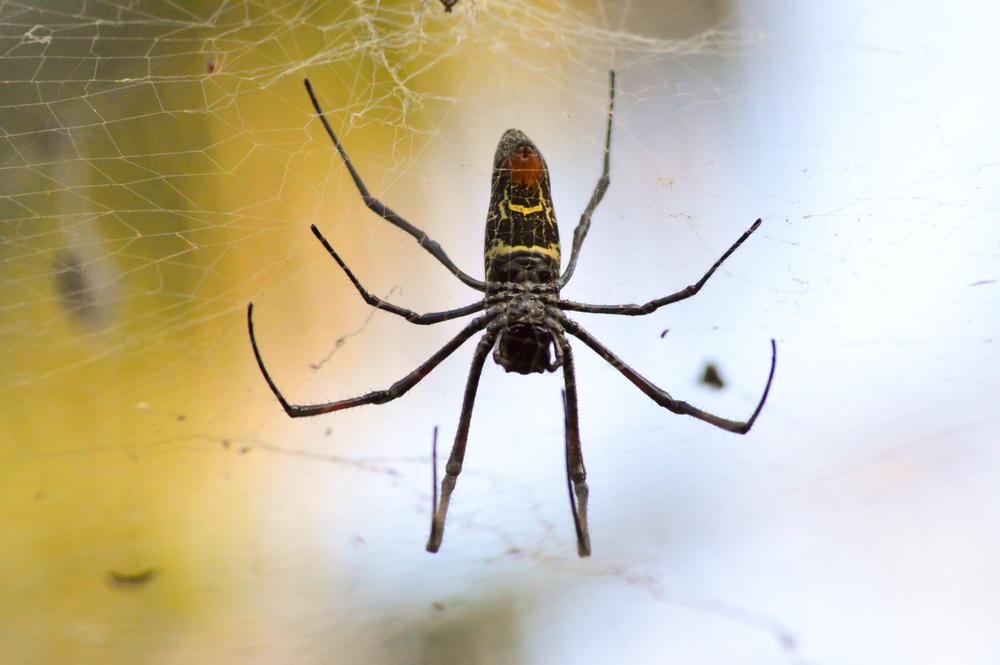Что общего между пауками-каннибалами и детьми.Вокруг Света. Украина