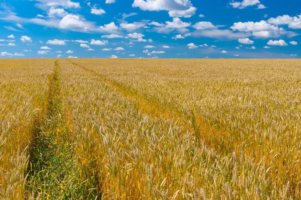 Украина поднялась в рейтинге уровня жизни, обогнав Беларусь и Россию