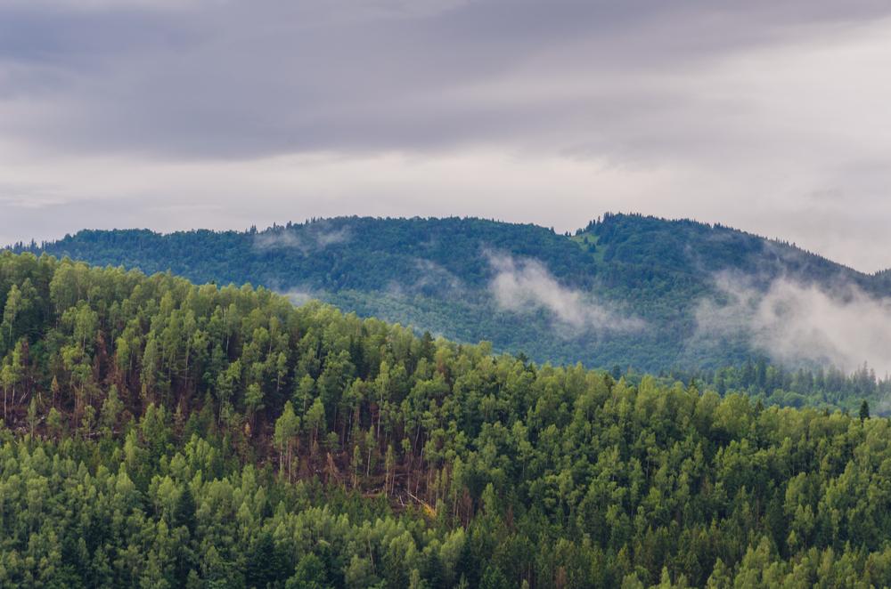 Украинские леса взяли под охрану ЮНЕСКО