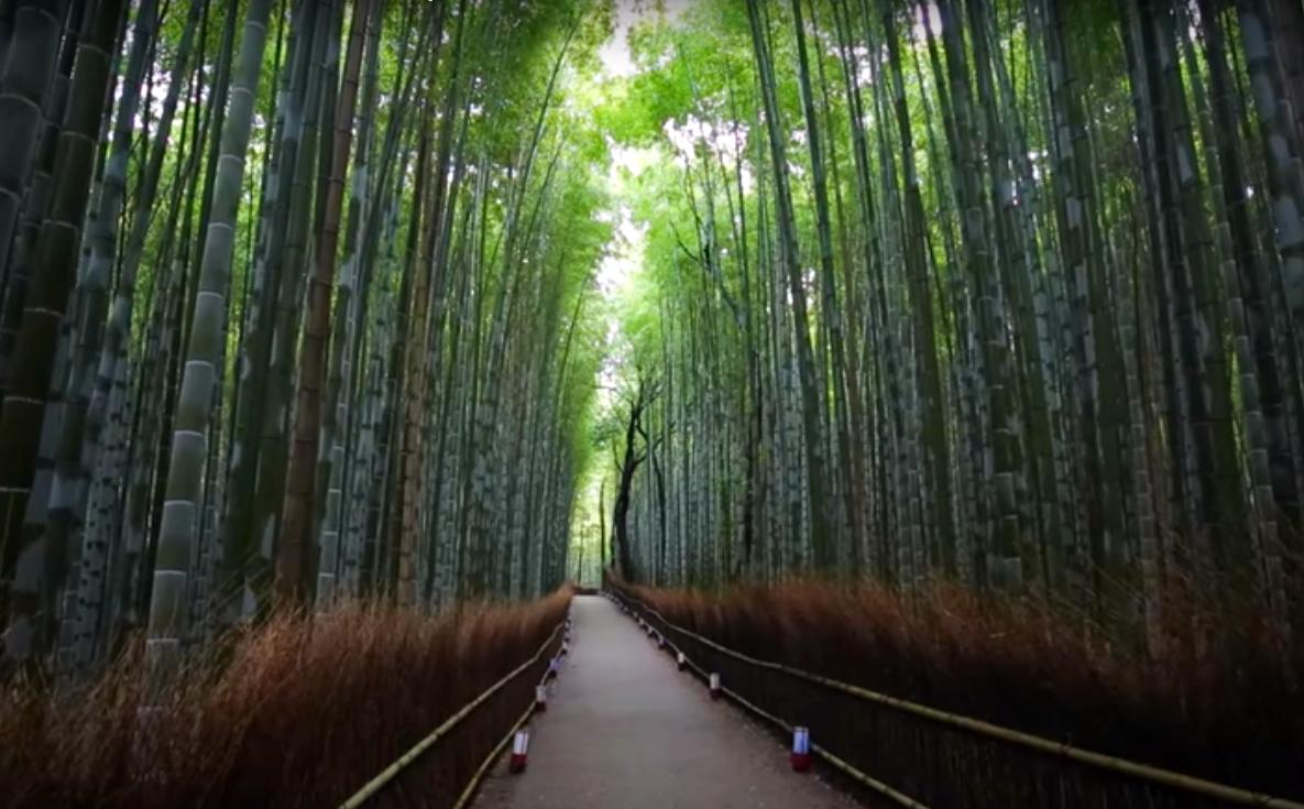 Самые красивые в мире леса
