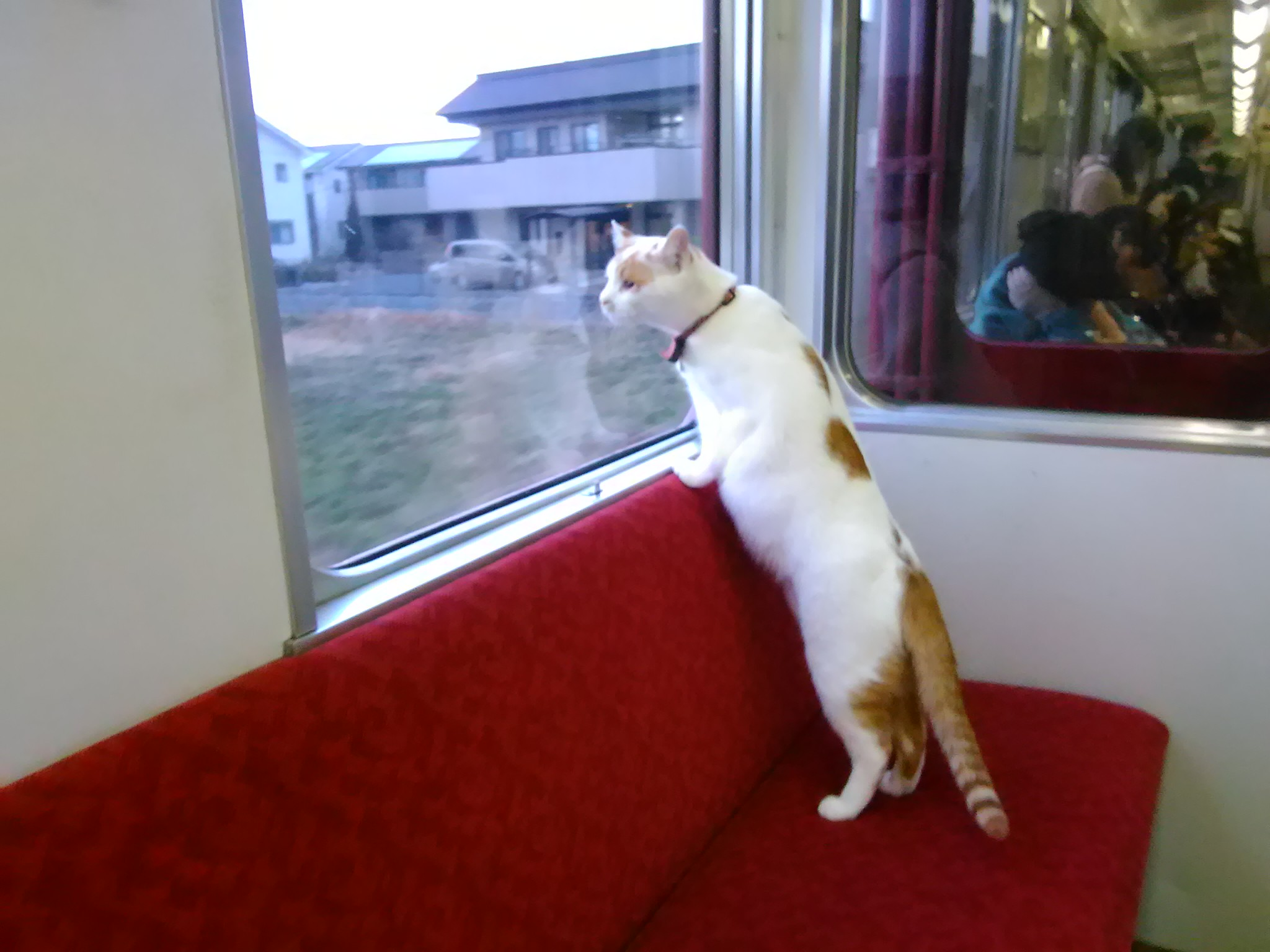 В Японии вагон-ресторан украсят живыми котами