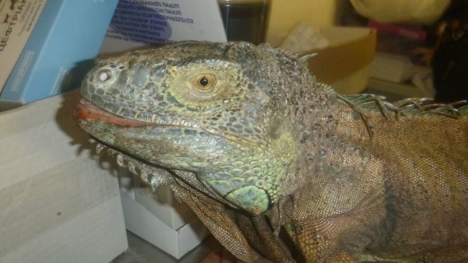 В селе под Киевом поймали «динозавра»
