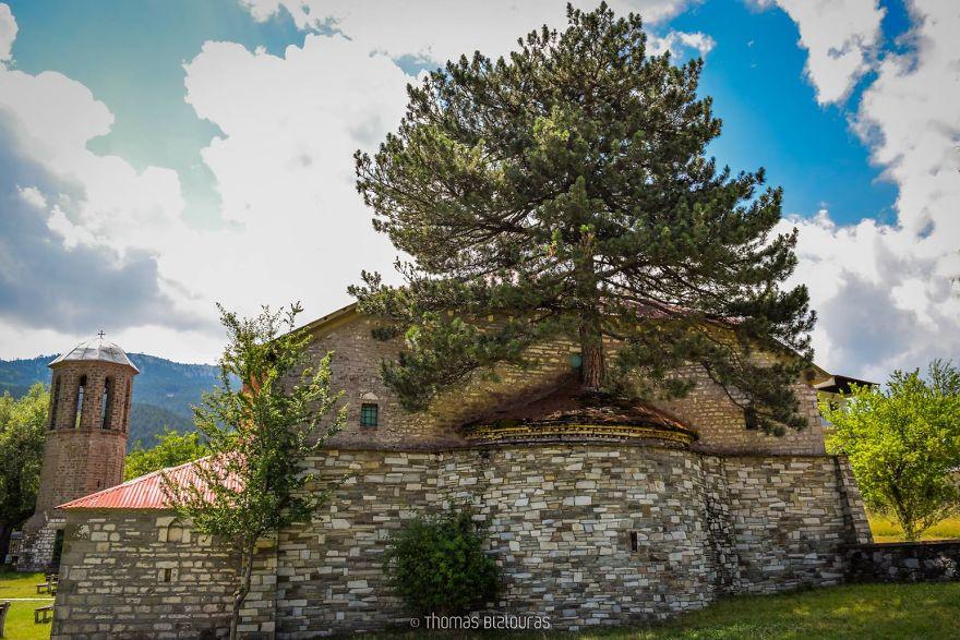 Храм одного дерева: 100-летняя сосна растет из стен монастыря в Греции