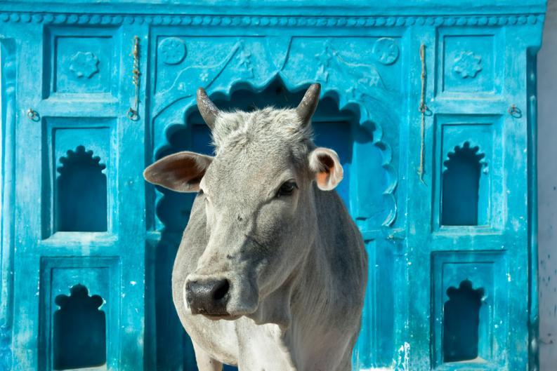 ТОП-20 фактов об Индии