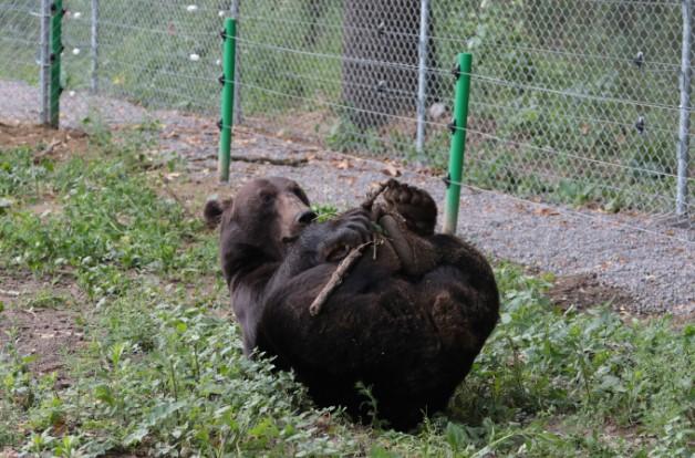 В сентябре под Львовом откроется медвежий приют.Вокруг Света. Украина