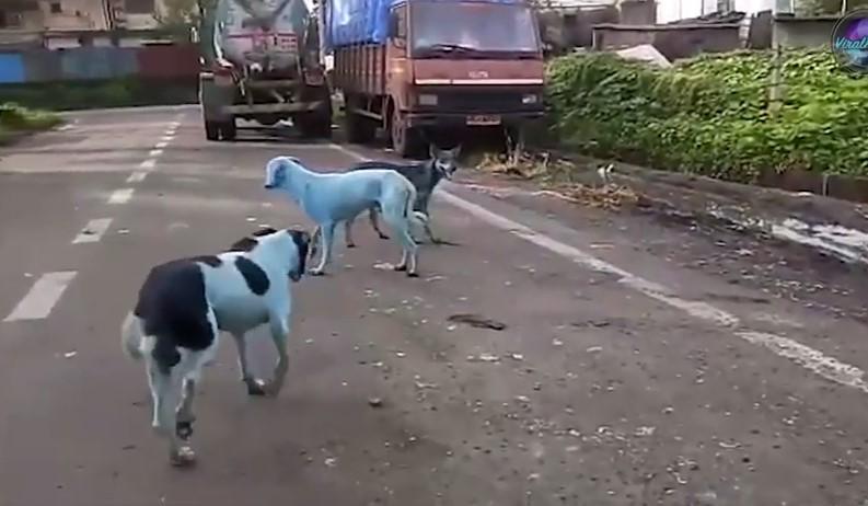 В Мумбаи появились голубые собаки