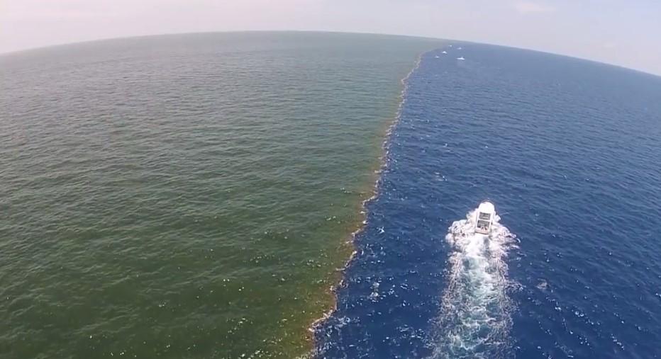 В Мексиканском заливе обнаружили мертвую зону рекордных размеров