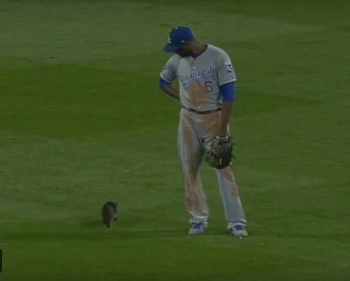 В Америке котенок парализовал бейсбольный матч