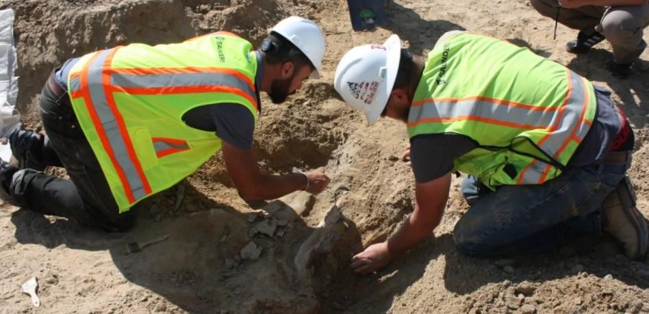 В США нашли идеальный скелет динозавра.Вокруг Света. Украина