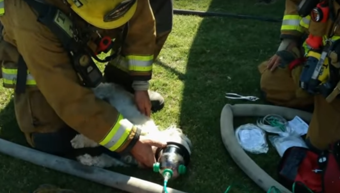 Кислородная маска, купленная на деньги школьниц, спасла жизнь щенку в Калифорнии
