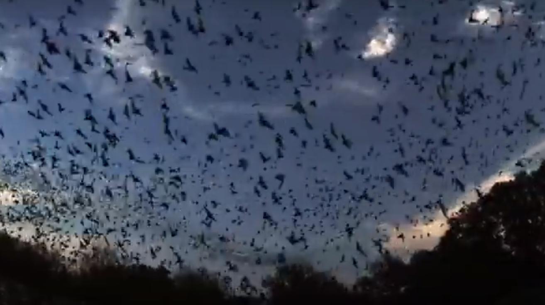 Пещера, где живет 30 млн летучих мышей.Вокруг Света. Украина