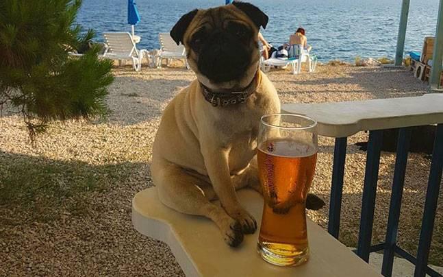 Кошкам вход воспрещен:  на пляже в Хорватии работает бар для собак.Вокруг Света. Украина