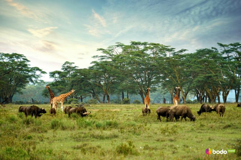 Путешествие в Кению: великая миграция антилоп и райский пляж Диани-Бич
