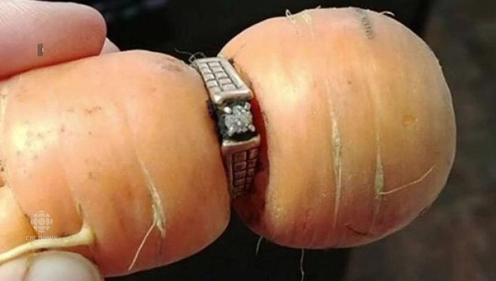В Канаде на моркови «выросло» обручальное кольцо