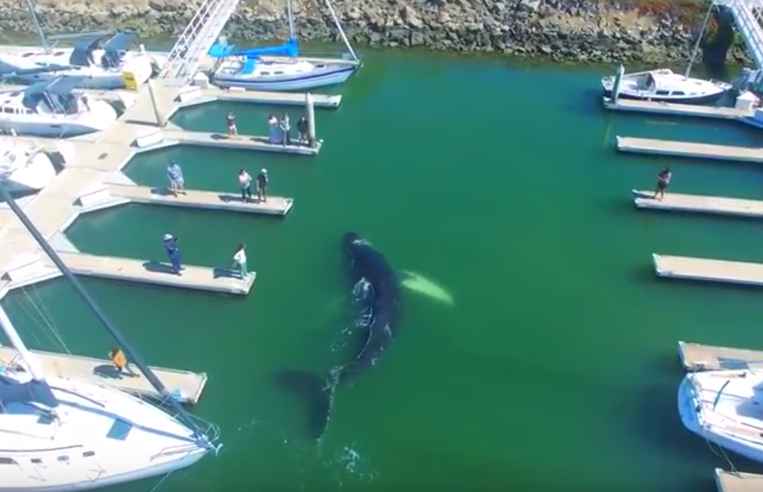 Синий кит заплыл на стоянку яхт