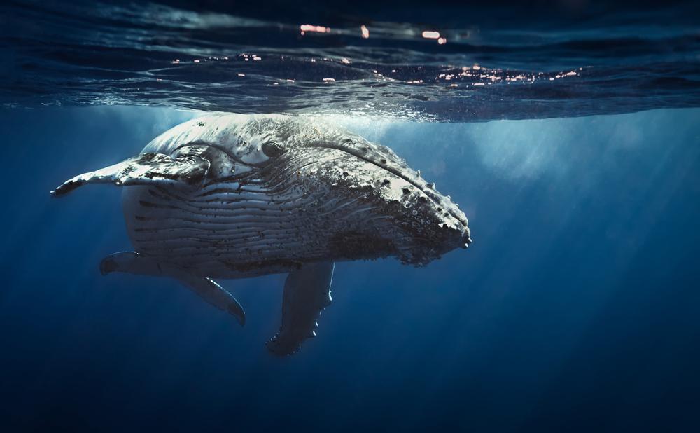 Древние киты были кровожадными хищниками