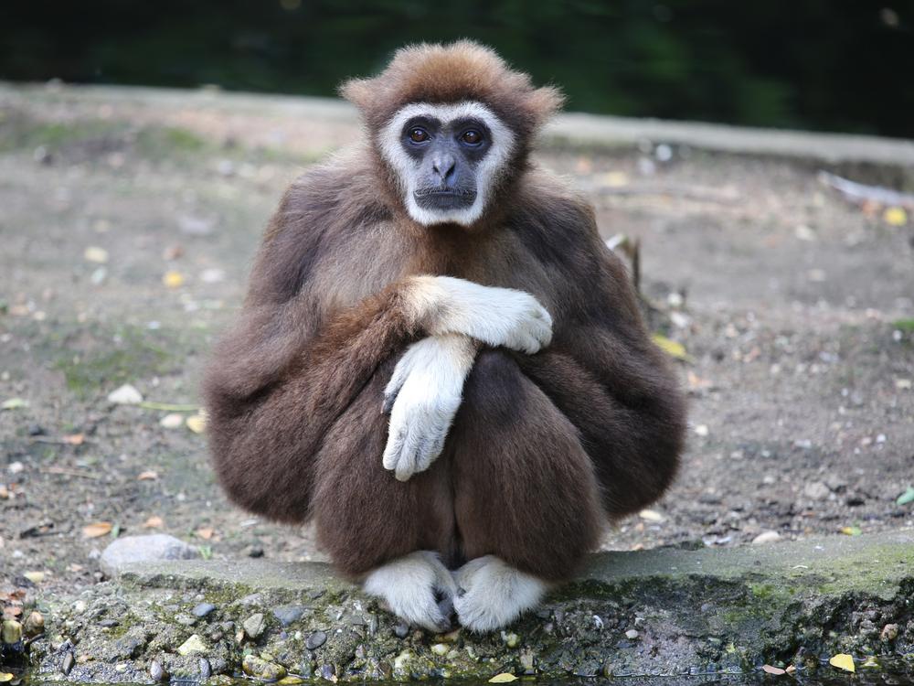 Ученые выяснили, как выглядел общий предок людей и обезьян