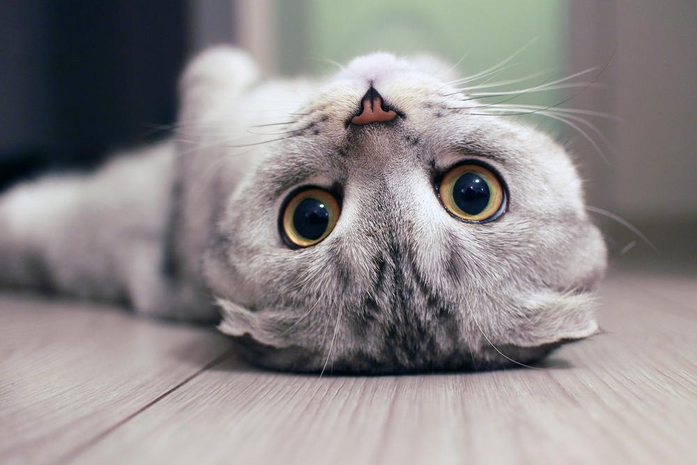 30 интересных фактов о кошках.Вокруг Света. Украина