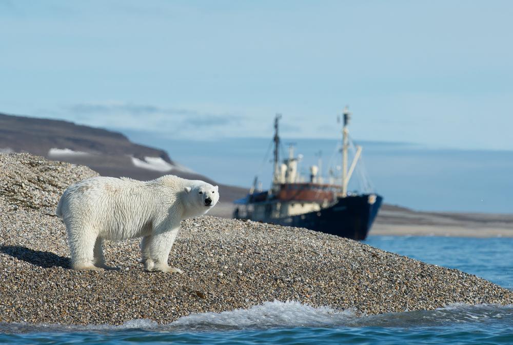 В Норвегии гида оштрафовали на $1,5 тыс. за то, что он напугал медведя