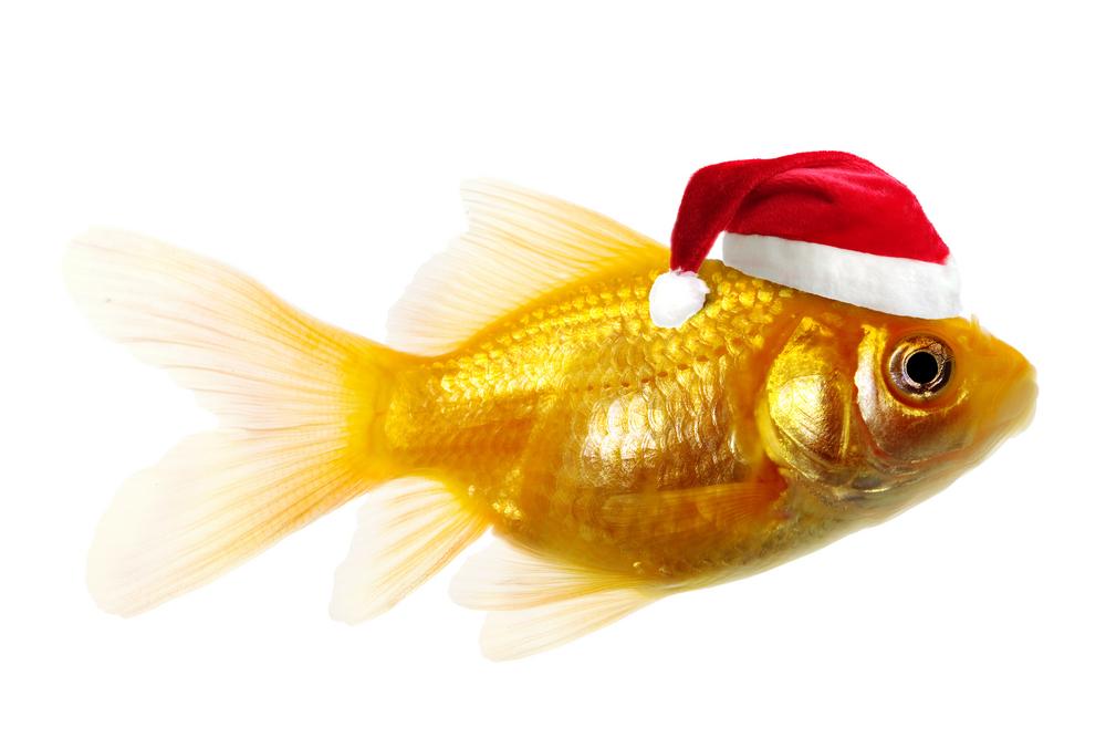 Золотые рыбки коротают зиму благодаря алкоголю