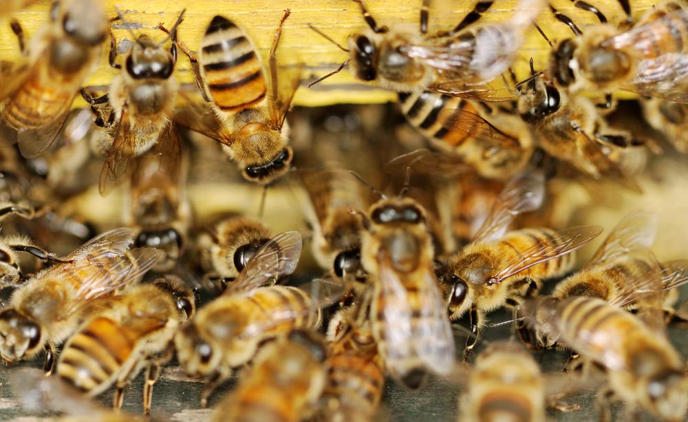 В Индии огромный рой пчел атаковал самолет