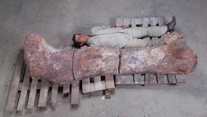 Семь слонов друг на друге: ученые нашли крупнейшего в истории динозавра