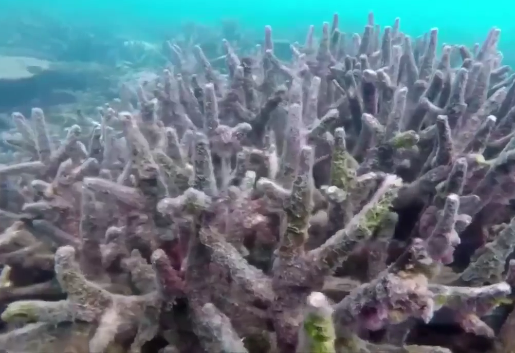 NASA создает самую глубокую ферму кораллов в мире