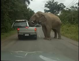 Слон против пикапа: ставки на авто лучше не делать