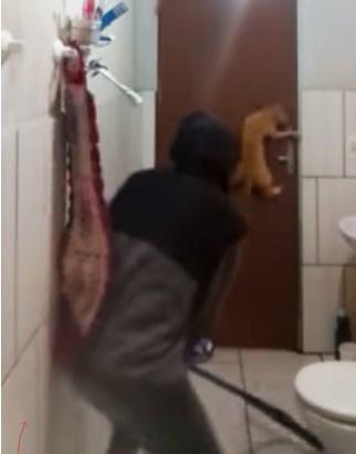 Крысиная коррида в обычной квартире